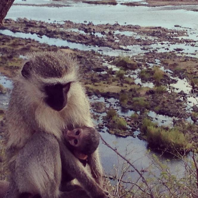 mum monkey